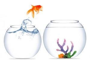 Goldfishjumping1